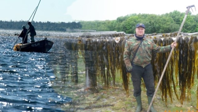 Уникальные омолаживающие и лечебные водоросли.